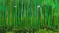 竹林竹海绿色舞台背景图片