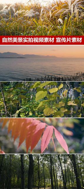 實拍秋天景色自然風光蘆葦蕩視頻