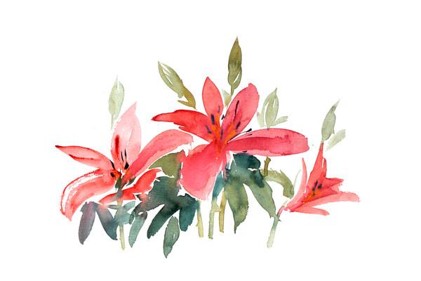 红色花朵插画