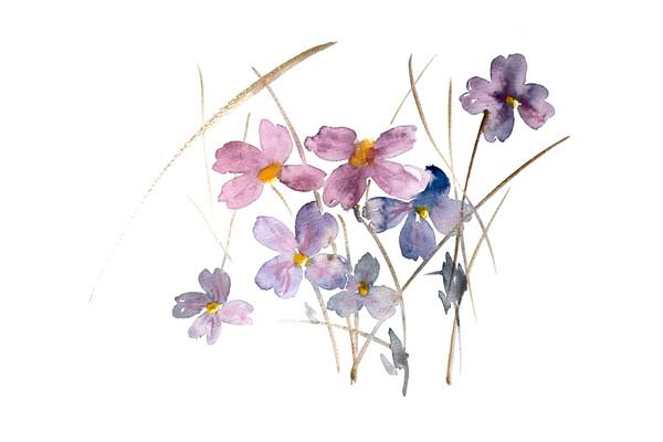 紫色花朵插画