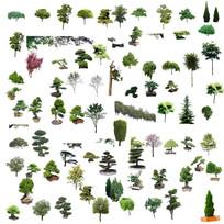 树木绿色植物抠图素材