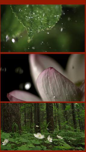 下雨的視頻