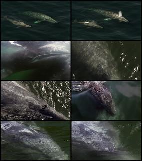 鲸鱼视频素材