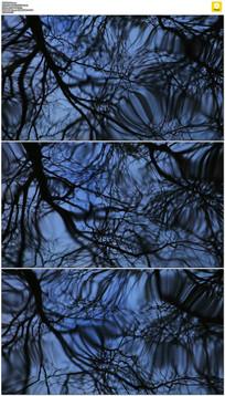 水面树枝倒影实拍视频素材