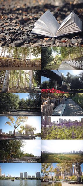 公园湿地唯美超清视频素材
