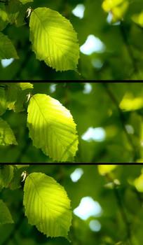 微风吹拂绿叶晃动视频素材
