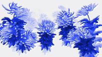中国风水墨青花瓷菊花动态视频