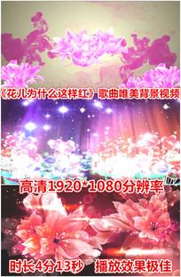 花儿为什么这样红歌曲背景视频