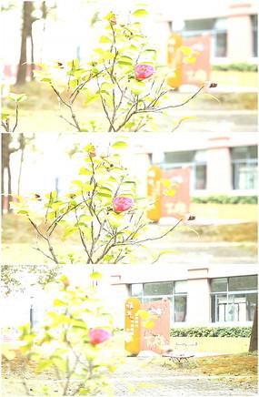 校园花朵格言绿化雕塑实拍视频
