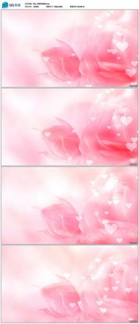 粉红色玫瑰花爱心背景视频