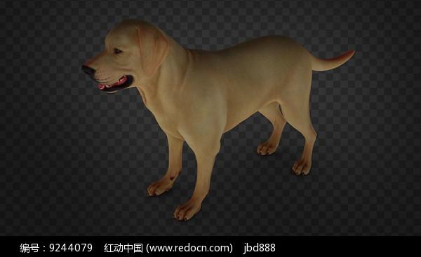 3dmax模型影视写实家小狗图片