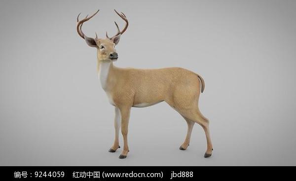3dmax模型影视写实鹿图片