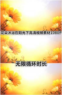 花朵沐浴在阳光下唯美视频