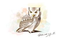 猫头鹰手绘动物插画水彩分层