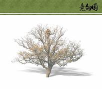 景观树立面ps素材