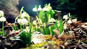 神奇大自然花儿开放视频