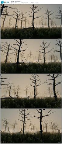 树木轮廓视频