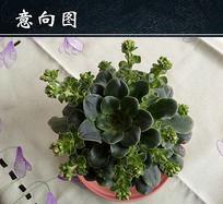 绿色多肉植物盆栽