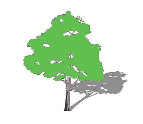 大树冠乔木