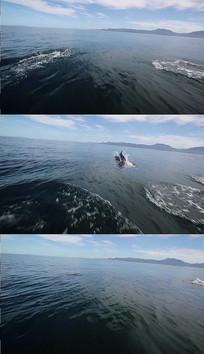 海豚水面跳跃实拍视频素材