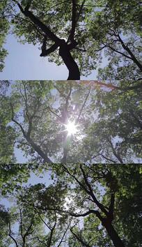 仰望树木阳光实拍视频素材