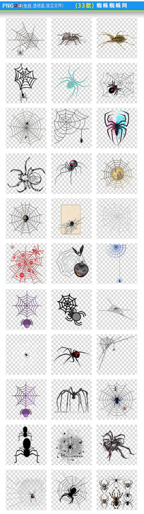 蜘蛛蜘蛛网PNG素材