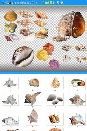 贝壳PNG素材