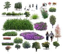 绿篱植物素材