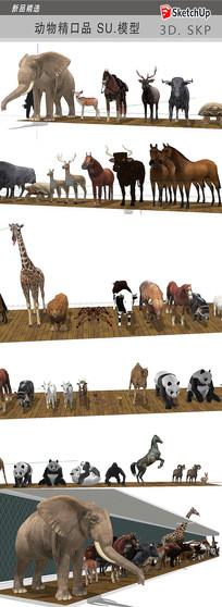 动物SU模型
