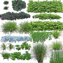 草类与绿篱类素材
