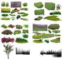灌木与绿篱草被素材