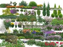 灌木与绿篱素材