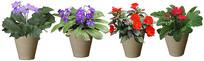 花朵小盆栽素材