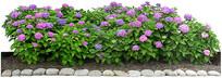 花卉绿篱素材