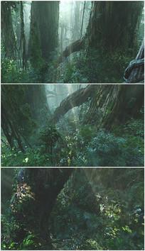 丛林密林热带雨林大树根视频