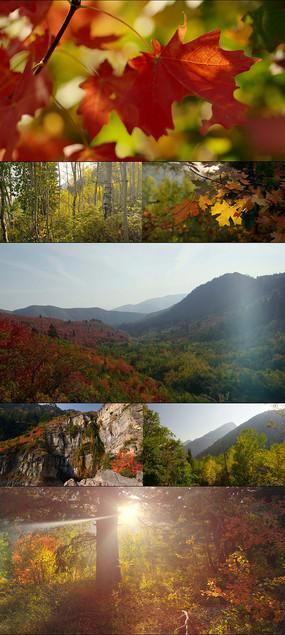 4K自然风景高山丛林风光