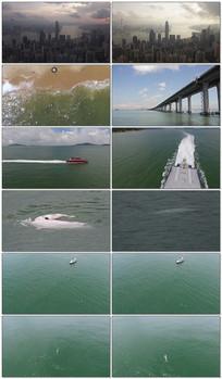 中华白海豚视频