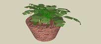 盆栽绿植SU模型