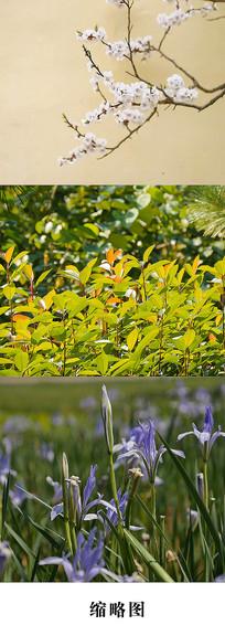 花草绿植视频素材