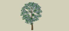 成品树冠SU模型