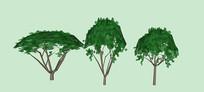 珊瑚树SU模型