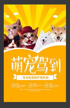 专业宠物护理机构海报