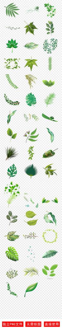 春装春游绿色绿叶树叶春天素材