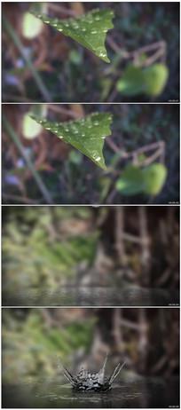 绿叶上的晶莹水珠落入水中视频