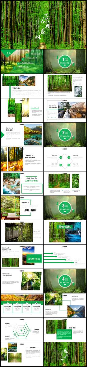原始森林湿地森林保护PPT