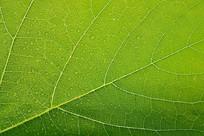 绿色叶子纹理