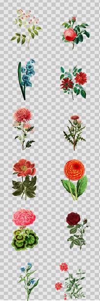 复古手绘植物花卉插画元素