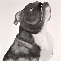 手绘水印斗牛犬无框画