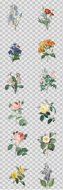 水彩手绘花卉元素