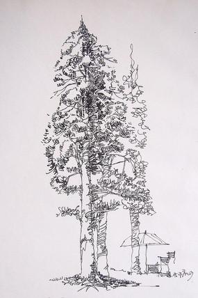 高大树木钢笔画 JPG